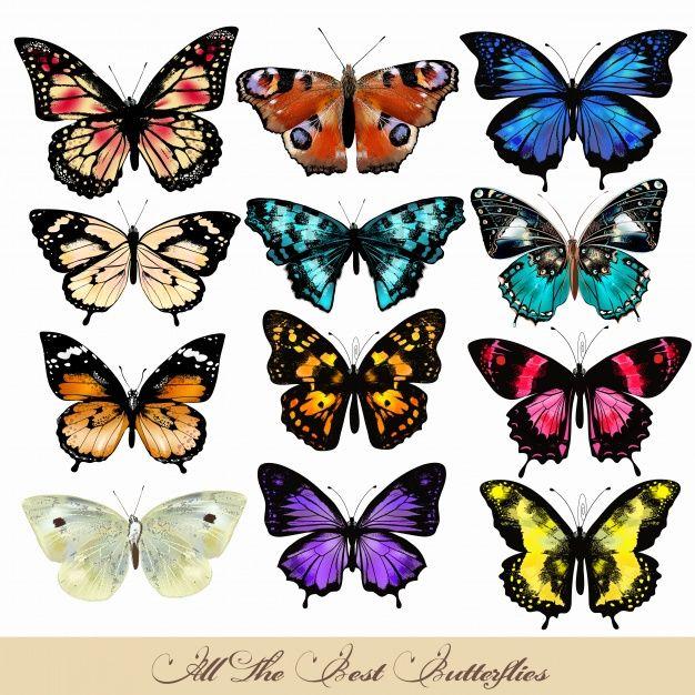 Coloured Butterflies Collection Colorful Butterfly Tattoo Butterflies Vector Butterfly Art