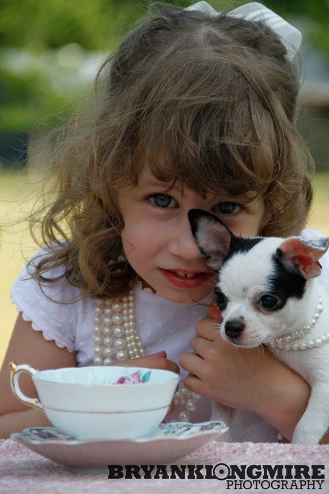 About Us Chihuahua Puppies Cute Animals Chihuahua Breeders