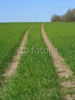 Feldweg über die grüne Wiese in Wettenberg Krofdorf-Gleiberg bei Gießen in Hessen