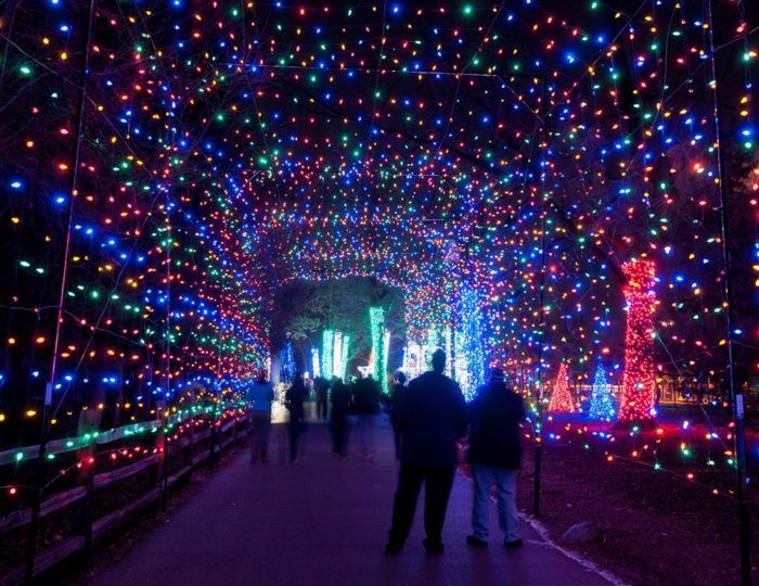 Christmas Light Displays 2019 6. Wild Lights at the Detroit Zoo (Detroit, December 22nd