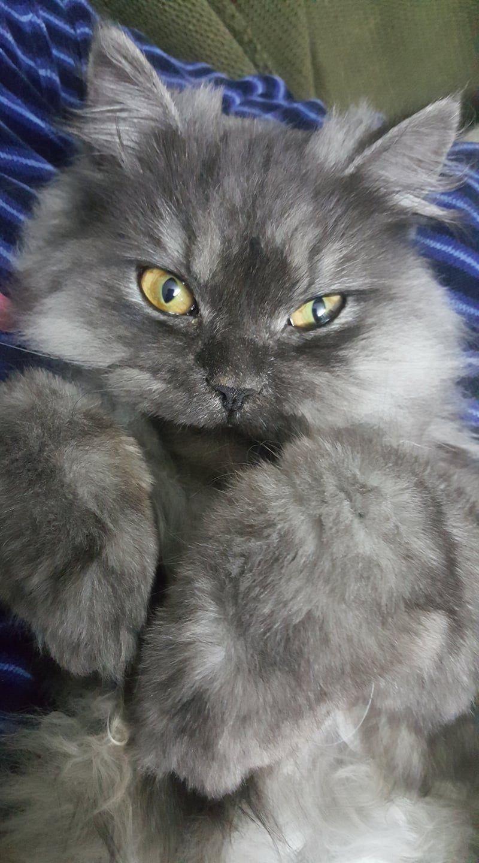 Beautiful https//ift.tt/34LZLhH Cute cats, Cat pics