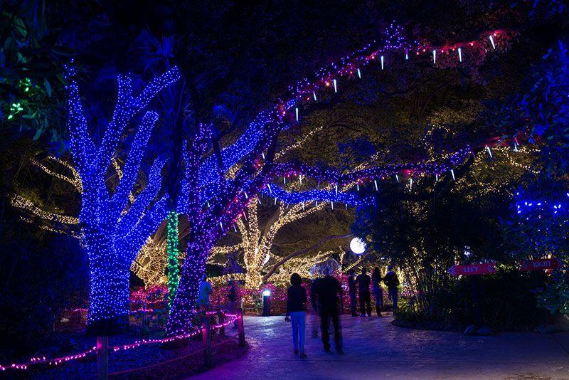 Zoo Lights Houston Zoo Zoo Lights Holiday Lights Display Christmas Things To Do