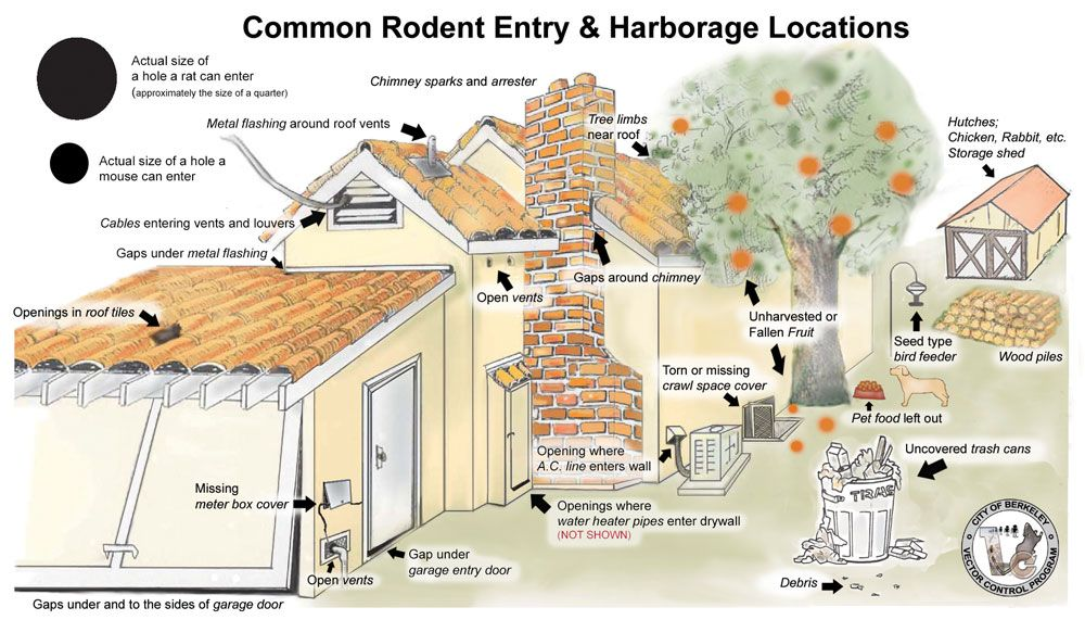 Control Preventions Of Rodents City Of Berkeley Ca Mice Infestation Rodents Pest Control Supplies