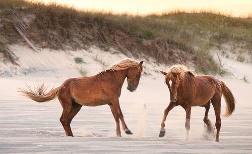 Horseh! =]