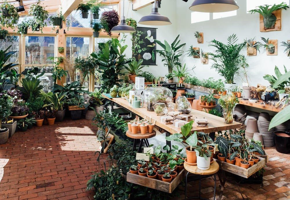 Photo Of Pistils Nursery Portland Or United States The Solarium At Is A 400sq Foot Gl Enclosed E Filled With Tropical Plants