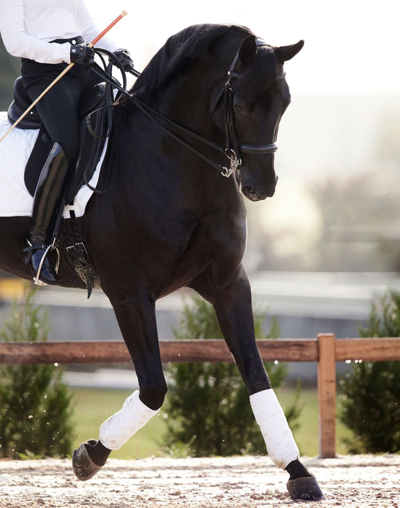 Photo of The Hermes Equitation Catalogue