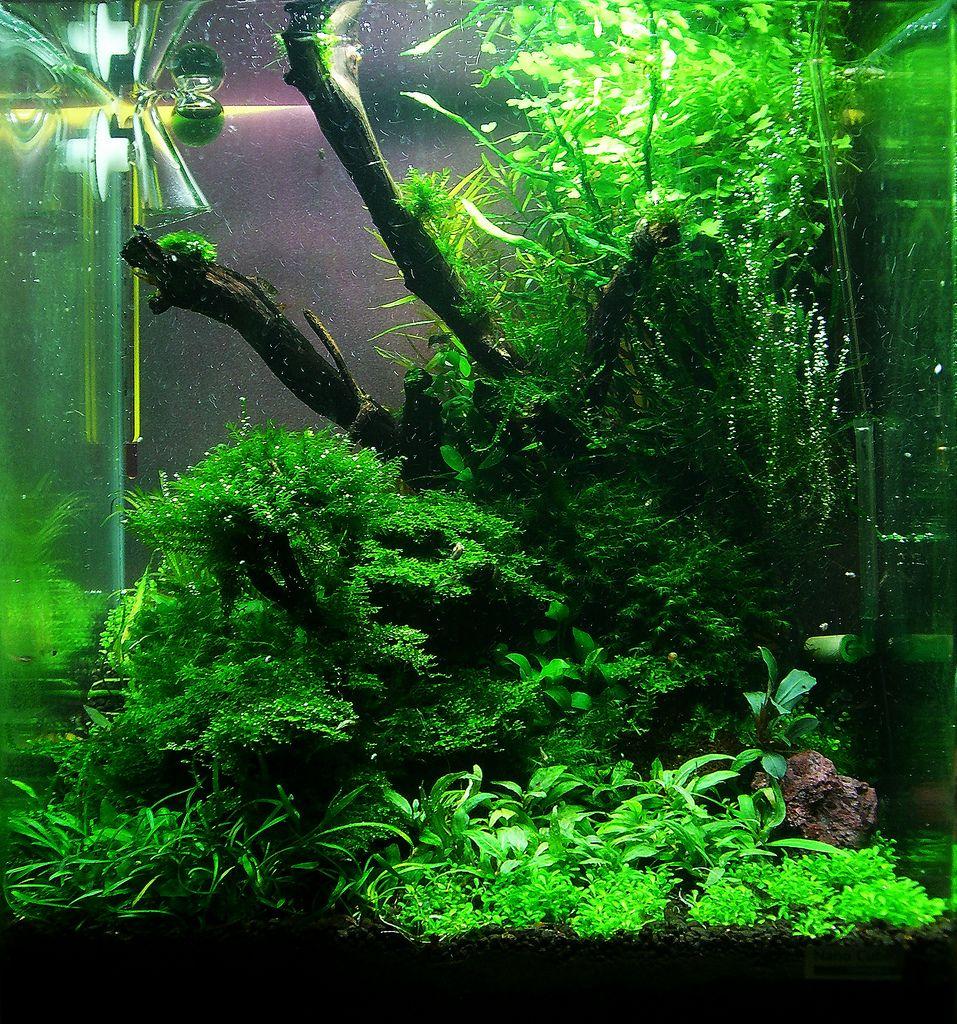 020312 Wurzelwerkv3 Wassergarten Tags Aquarium Tank Shrimp Cube Nano Aquascape Aquaristik 30l Aquascaping Dennerle Wassergarten Aquascaping Planted Aquarium