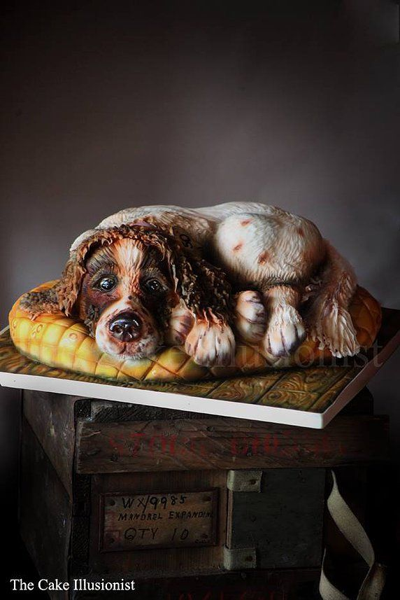 www.thecakeillusionist.co.uk Dog cake, sculpted dog, animal cake, edible art, cake, airbrush cake, springer Spaniel,