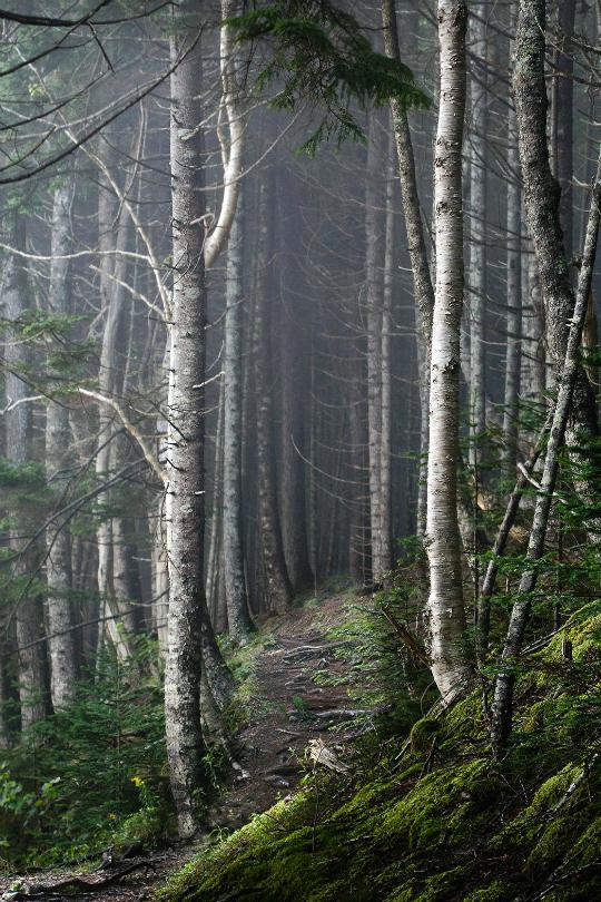 urbnite — tulipnight: Foggy Forest by Tracy Munson