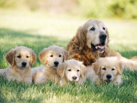 Mother Dog And Puppies Photographic Print By Stan Fellerman