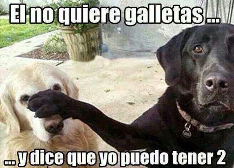 Los Mejores Memes De Mascotas Perros Graciosos Memes De Perros Chistosos Memes Perros
