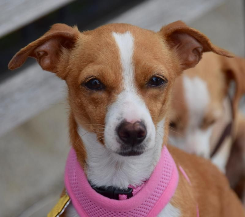 Adopt Clover! on (With images) Dog list, Rescue dogs