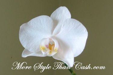 b60fe207f7f8c0548b7fa9186a6873c5 - How To Get An Orchid To Bloom A Second Time