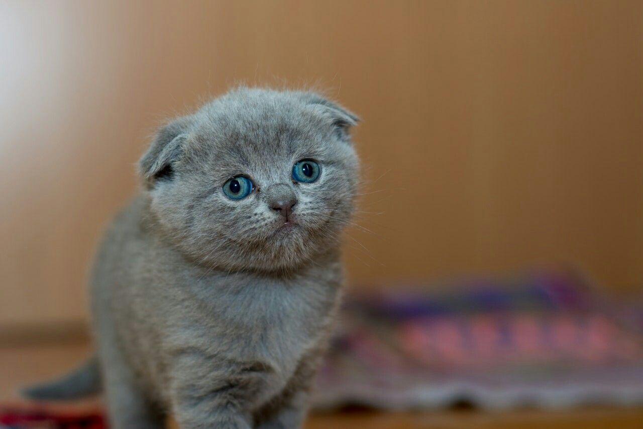 #kittenlove
