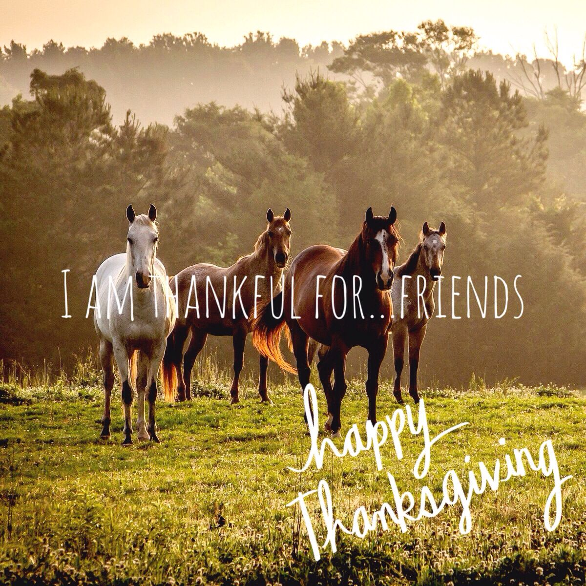 I am thankful for...friends happy Thanksgiving DrKay (With