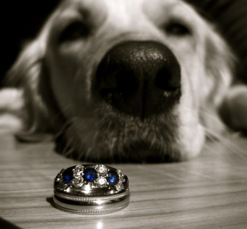 aww... wish puppy could be the ring bearer!  i miss her already.