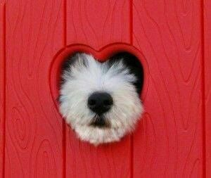 It's Friday! Here's a puppy of love for you.
