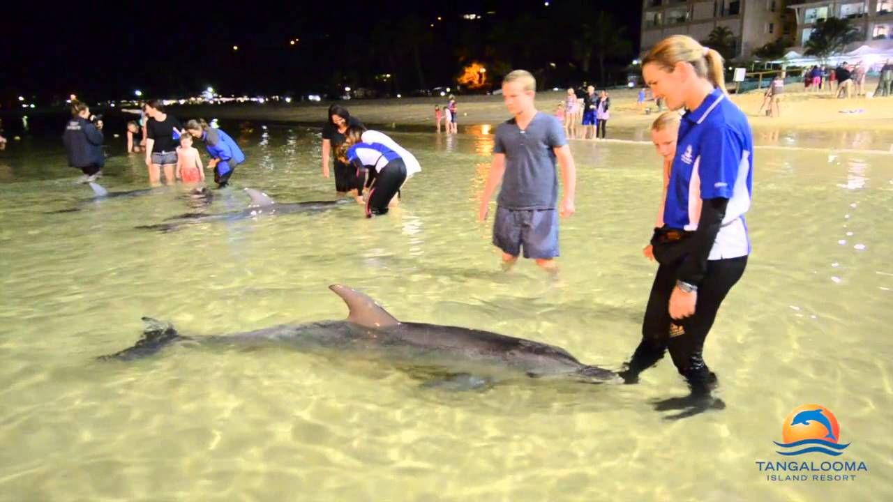 Dolphins tangalooma resort on moreton island qld