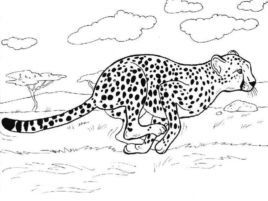 Free Cheetah Coloring Pages In 2020 Animal Coloring Pages Zoo Animal Coloring Pages Coloring Pages