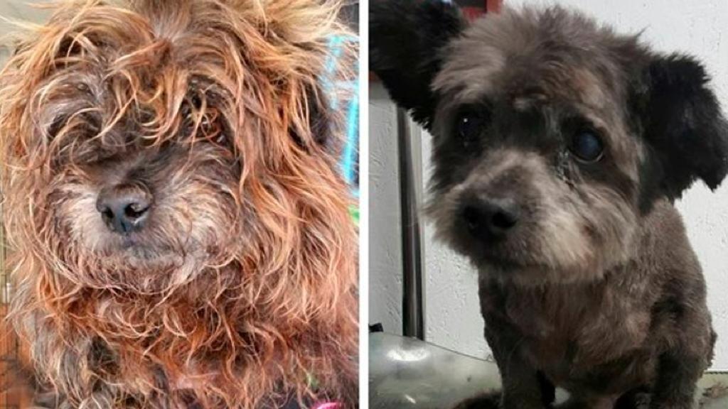 KTLA on Elderly dogs, Shelter dogs, Dogs