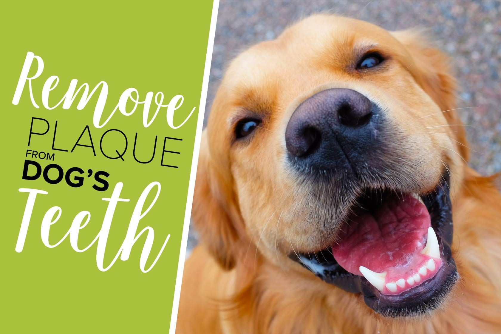 how to remove tartar from dog teeth