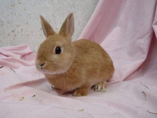 Princess Babygirl かわいいウサギ うさぎ ウサギ