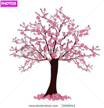 Japanese Cherry Blossom Tree Cherry Blossom Vector Blossom Trees Cherry Blossom Tree