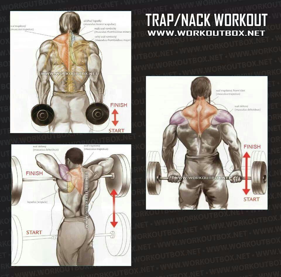 Trap Workout Traps Workout Gym Workouts Exercise