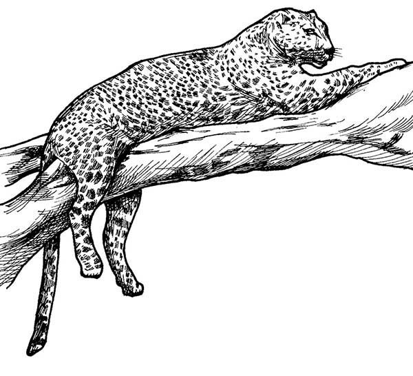 Tiger Leopard Tiger On A Tree Branch Coloring Page Coloring