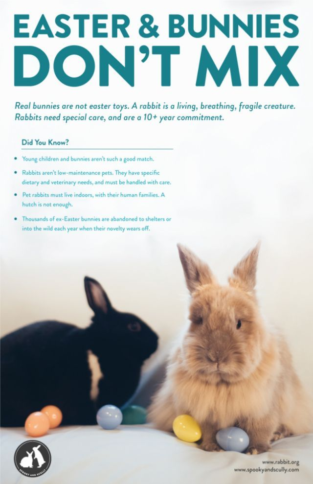 Bathing Your Easter Bunny Isn T Cool Low Maintenance Pets