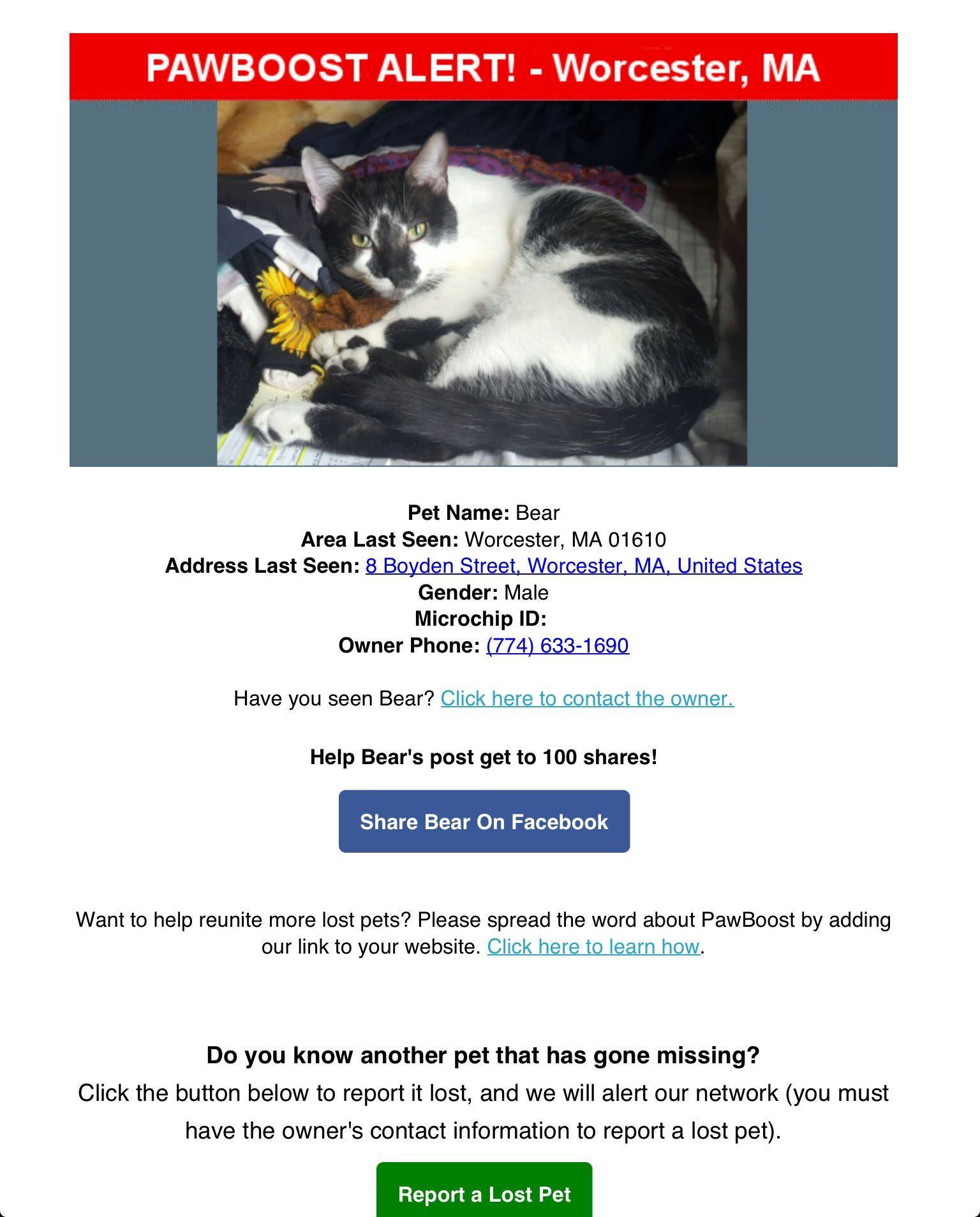 Lost Cat Named Bear Worcester Ma Pet Names Lost Cat Cat Names