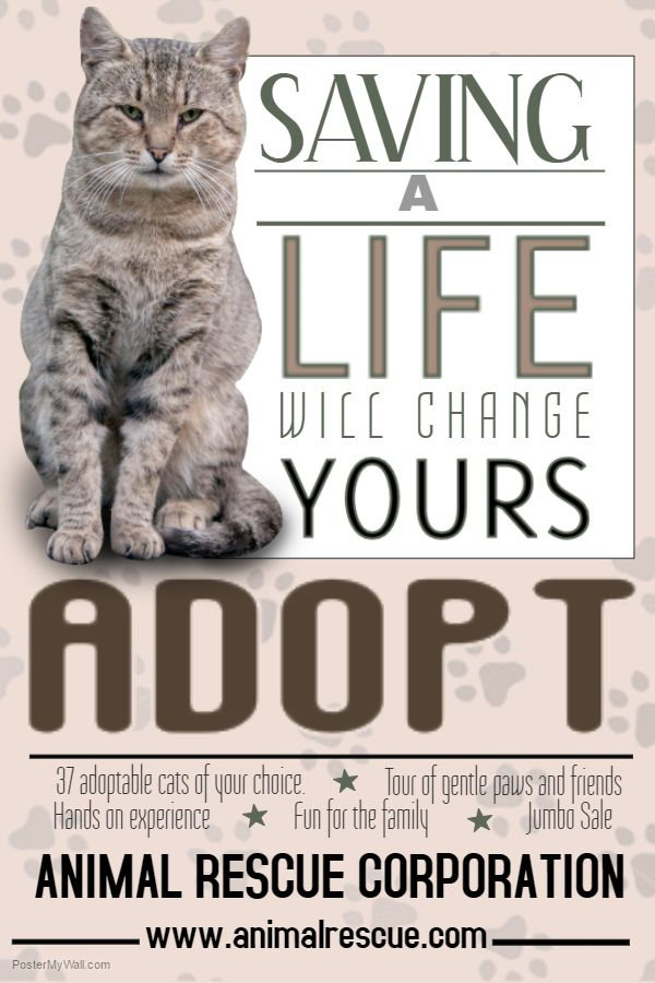 Pet Adoption Flyer Template Or Social Media Template Lost Pet And