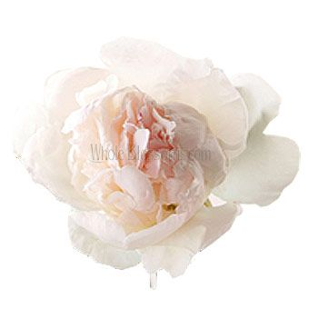 Fresh Peony Blush Flowers For Wedding At Discount Prices