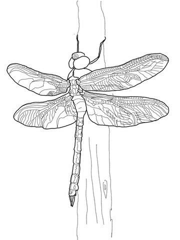 Dragonfly Coloring Page Names Display