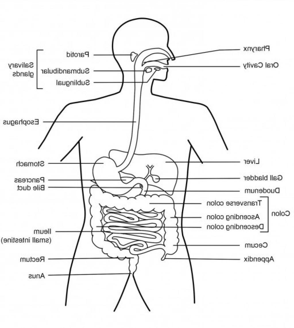 human digestive system health