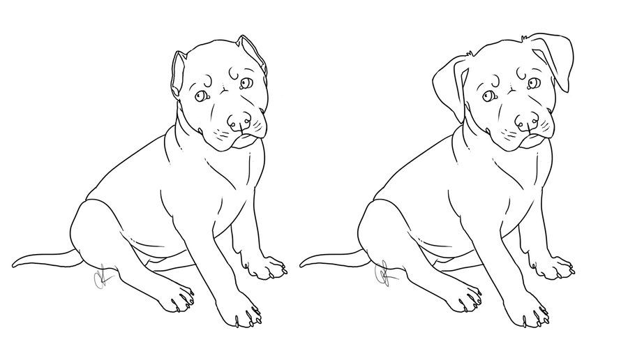 Drawing Pit Bulls Pitbull Puppy Drawing Puppy Drawing Pitbull