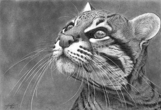 Realistic Pencil Drawings   Realistic Graphite Pencil Drawing Cat Bird Watcher
