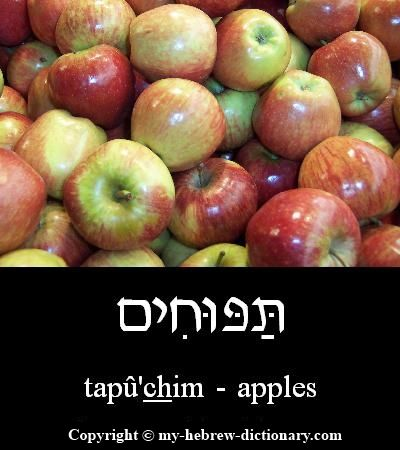 "How to say ""Apples"" in Hebrew. Click to hear it pronounced"