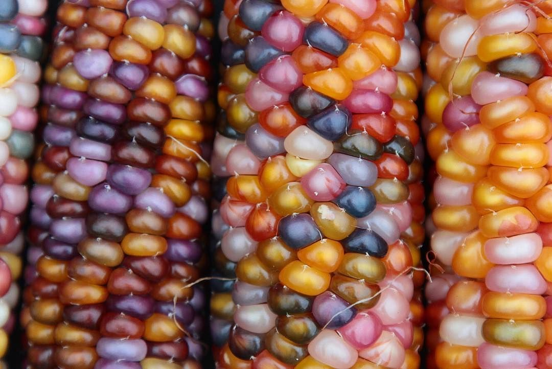 Laurie Green On Instagram Glass Gem Corn Closeups From