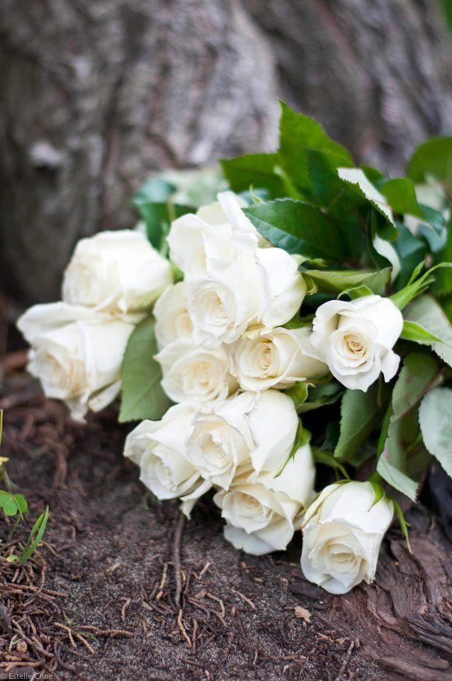 Pin By Maryam Essa On Garden Variety White Flowers White Roses Beautiful Flowers