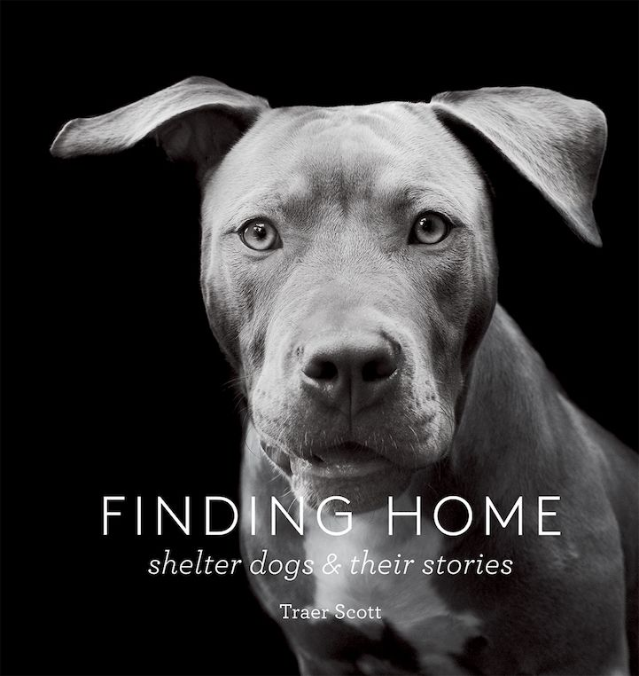 Interview New Beautifully Poignant Portraits Of Shelter Dogs By Traer Scott Shelter Dogs Dog Books Rescue Dogs