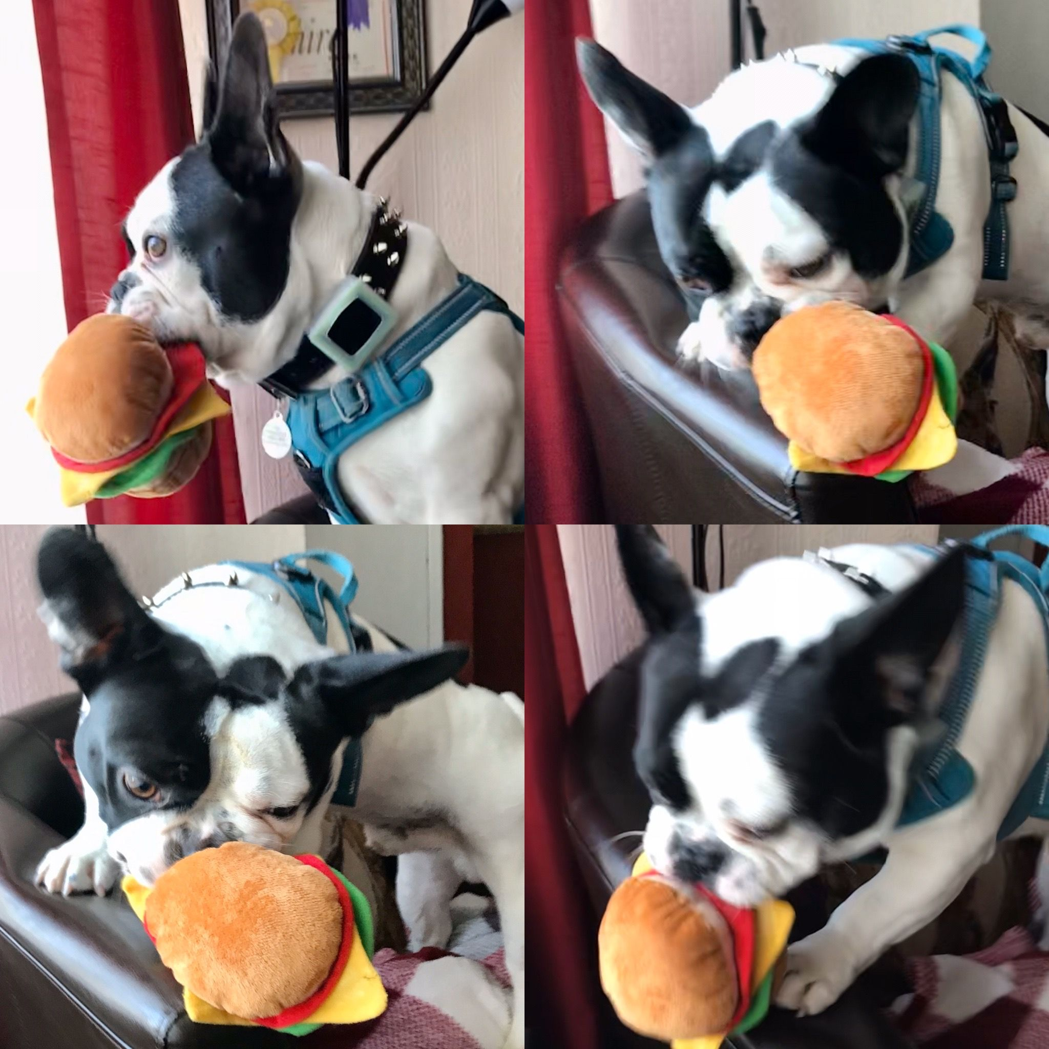 Pin by Tyra Rose on Trevor Le woof Small dog toys, Dog