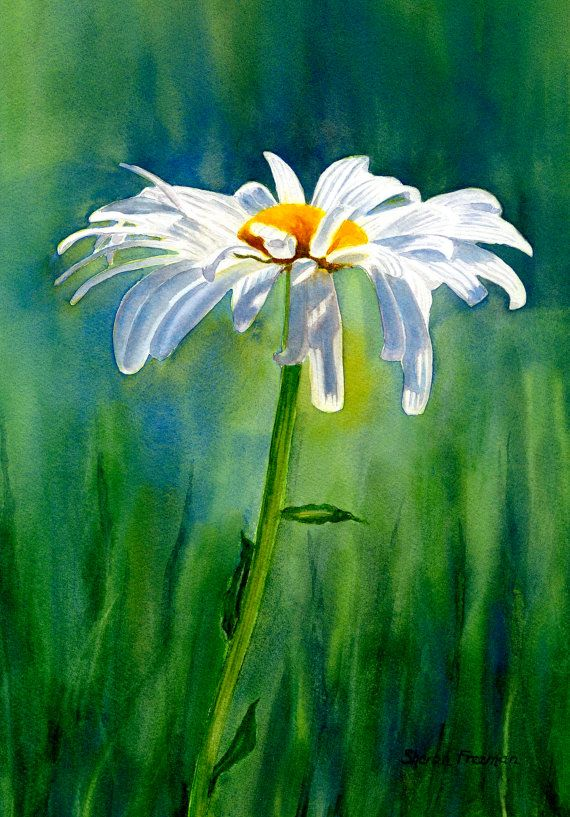 White Daisy Watercolor Daisies Watercolor Painting
