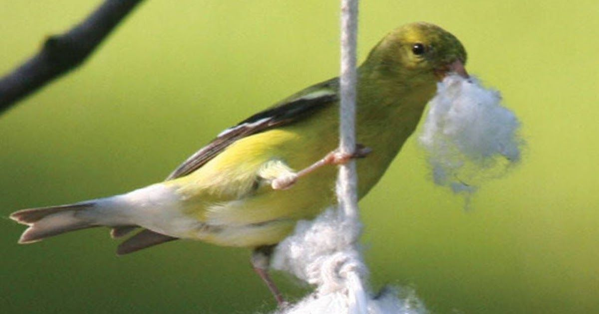 Wild Birds Unlimited Put Out Your Nesting Material For