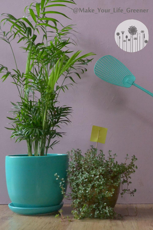 Jak Pozbyc Sie Zwalczyc Ziemiorke Sposoby Na Male Czarne Muszki Latajace Kolo Roslin Domowych Planter Pots Planters Garden