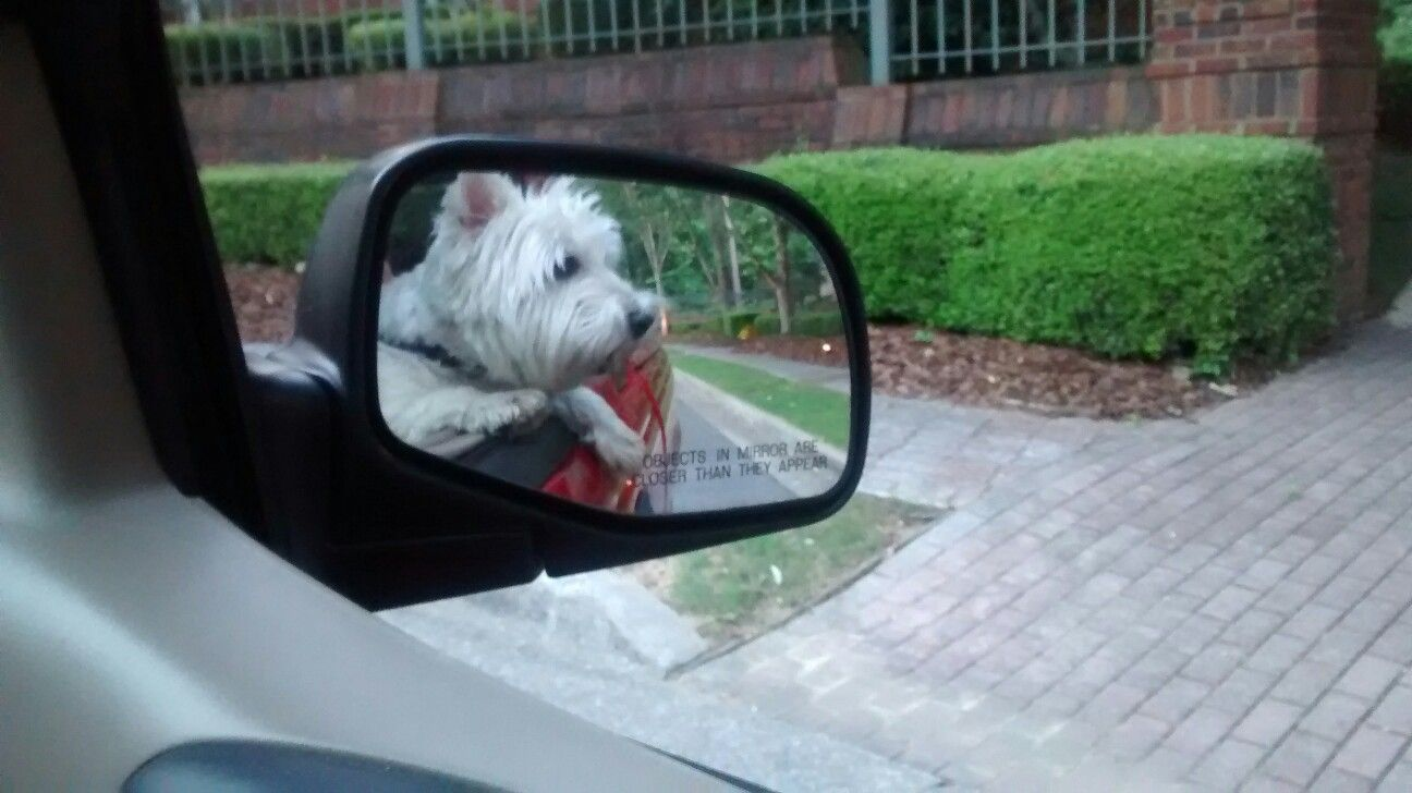 Going for a ride