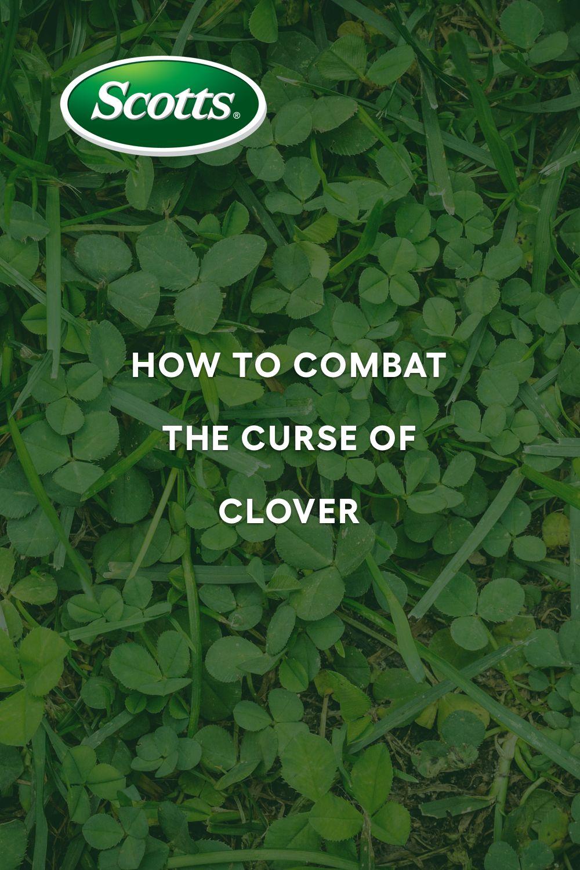 b61856deb389baad0b601f226c4de311 - How To Get Rid Of Clover Patches In Lawn