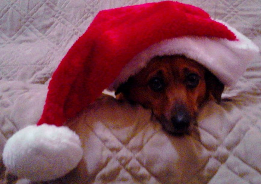 Absolutely precious in her santa hat!