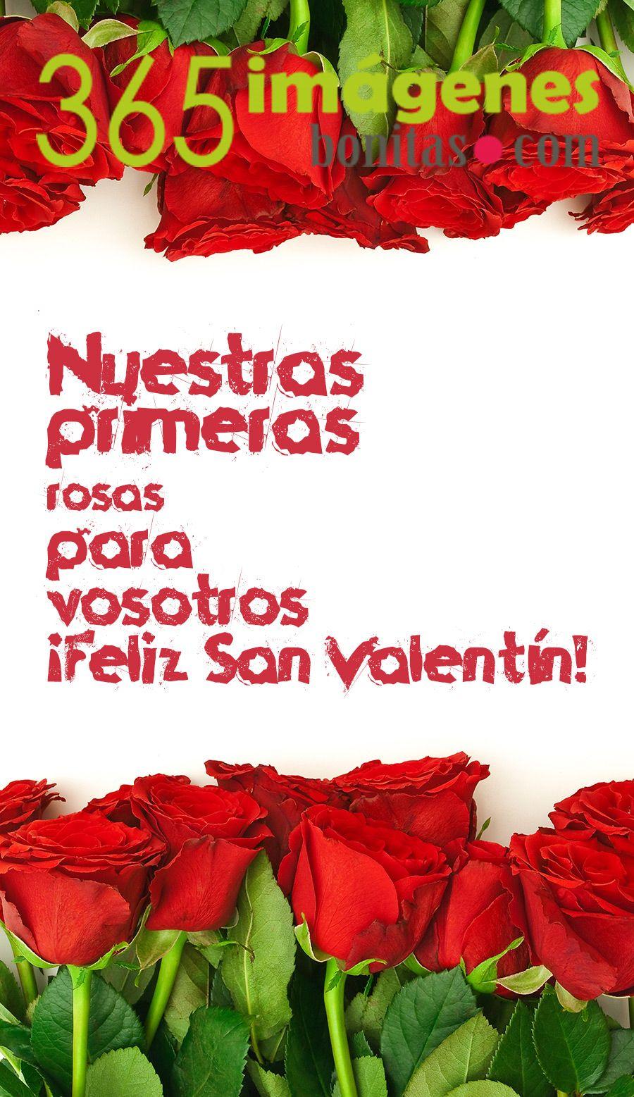 Imágenes De San Valentn Rosas Rojas Nuestras Primeras Rosas Para Vosotros Por San Valentn