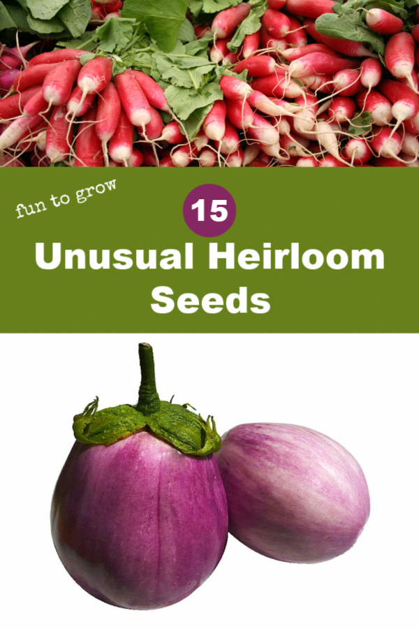 There Are Certain Assists To Keeping Bugs Down The Constant Stimulating Of The Soil By Earthworms Is Heirloom Vegetables Heirloom Seeds Organic Gardening Tips